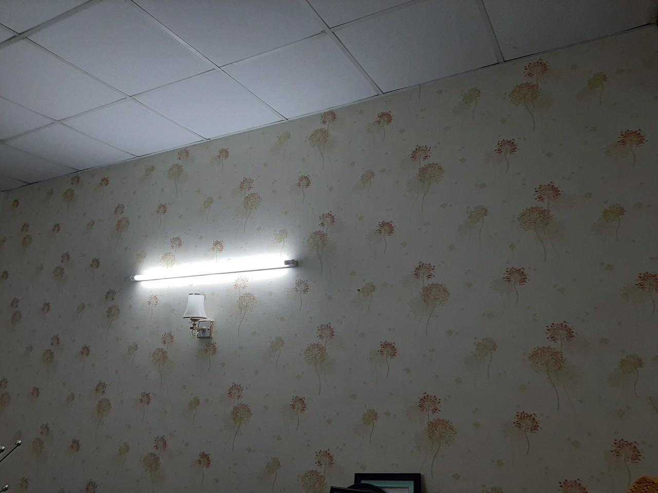 phoenix88311 3 Giấy Dán Tường Phòng Ngủ Phoenix 88311 3